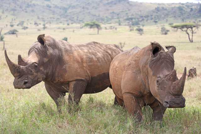 Ownership row threatens running of rhino reserve