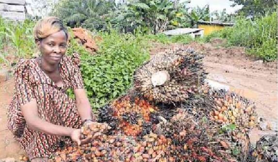 Uganda's oil palm sector yields results
